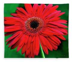 Mother's Day Gerbera Daisy Fleece Blanket