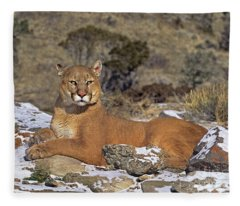 Mountain Lion Felis Concolor Captive Fleece Blanket