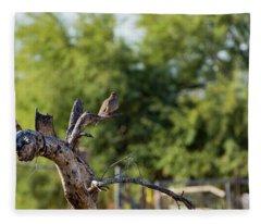 Mourning Dove In Old Tree Fleece Blanket