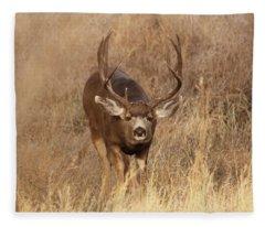 Muledeerbuck1 Fleece Blanket