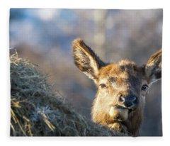 Munching Fleece Blanket