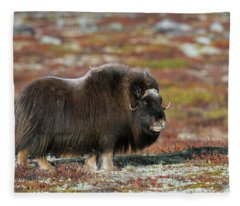 Muskox Fleece Blanket