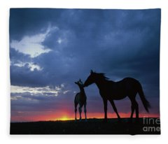 Mustang And Foal At Sunset Fleece Blanket