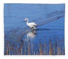 Mute Swan Climbs On The Ice Fleece Blanket