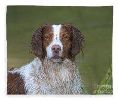 My Wet Brittany Fleece Blanket