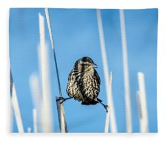 Nature's Circus Fleece Blanket