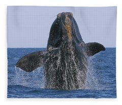 North Atlantic Right Whale Breaching Fleece Blanket