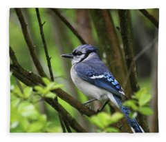 Northern Blue Jay Fleece Blanket