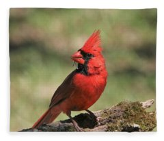 Northern Cardinal Portrait Fleece Blanket