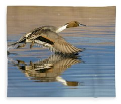 Northern Pintail With Reflection Fleece Blanket