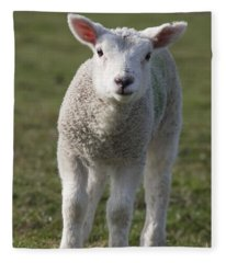 Northumberland, England A White Lamb Fleece Blanket