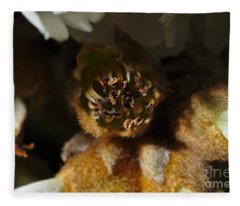 Old Loquat Tree Flower Fleece Blanket