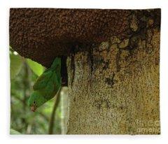 Orange -chinned Parakeet  On A Termite Mound Fleece Blanket