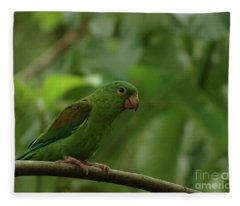 Orange-chinned Parakeet  Fleece Blanket