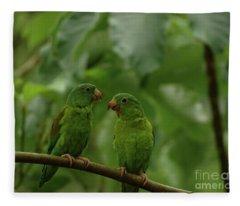 Orange-chinned Parakeets-  Fleece Blanket