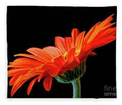 Orange Gerbera On Black Fleece Blanket