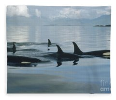Orca Pod Johnstone Strait Canada Fleece Blanket