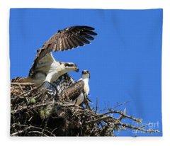 Osprey Chicks Ready To Fledge Fleece Blanket