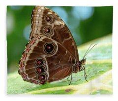 Owl Butterfly Fleece Blanket