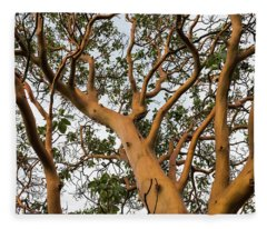 Pacific Madrone Trees Fleece Blanket