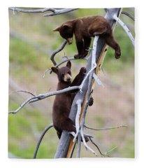 Pair Of Bear Cubs In A Tree Fleece Blanket