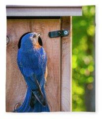 Papa Bluebird At The Nest Box Fleece Blanket