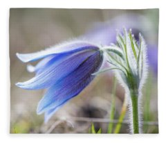 Pasque Flower's Silver Grey Hair Fleece Blanket