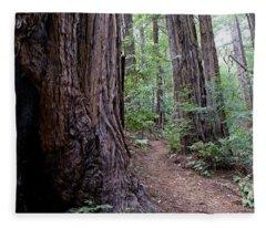 Pathway Through A Redwood Forest On Mt Tamalpais Fleece Blanket