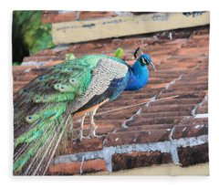 Peacock On Rooftop Fleece Blanket