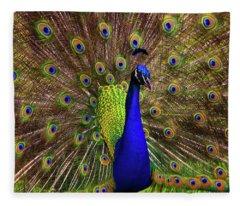 Peacock Showing Breeding Plumage In Jupiter, Florida Fleece Blanket