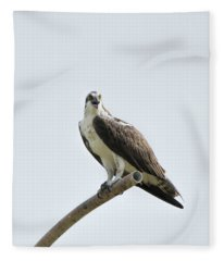 Perched Osprey Call Fleece Blanket