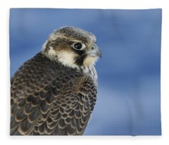 Peregrine Falcon Juvenile Close Up Fleece Blanket