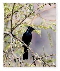 Phainopepla Black Cardinal Fleece Blanket