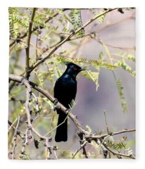 Phainopepla Black Cardinal Fleece Blanket