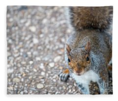 Photo Of Squirel Looking Up From The Ground Fleece Blanket