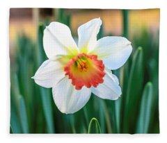 Pink Cup Solo Daffodil Fleece Blanket