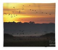 Pink Footed Geese At Holkham Norfolk Uk Fleece Blanket