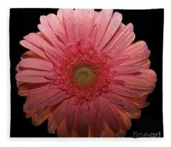 Pink Gerbera Daisy  Fleece Blanket