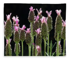 Pink Lavender Fleece Blanket