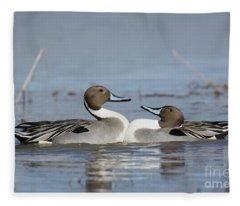 Pintails Fleece Blanket