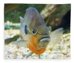 Piranha Behind Glass Fleece Blanket