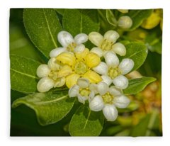 Pittosporum Flowers Fleece Blanket