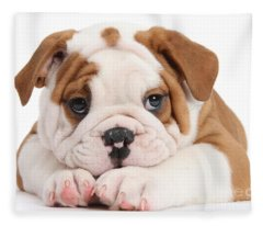 Po-faced Bulldog Fleece Blanket