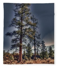 Ponderosa Pines At The Bonito Lava Flow Fleece Blanket