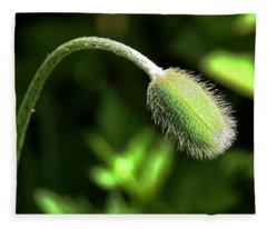 Poppy Bud In Sunlight Fleece Blanket