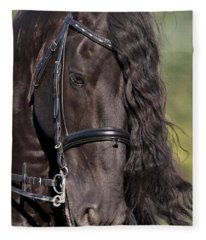 Portrait Of A Friesian Fleece Blanket