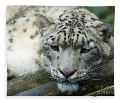 Portrait Of A Snow Leopard Fleece Blanket