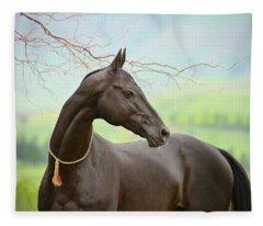 Portrait Of Black Akhalteke Fleece Blanket