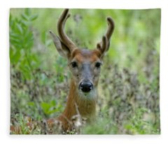 Portriat Of Male Deer Fleece Blanket