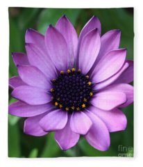 Purple Daisy Square Fleece Blanket